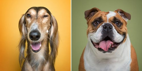 Proof That Every Dog Has Its Own Human-Like Personality
