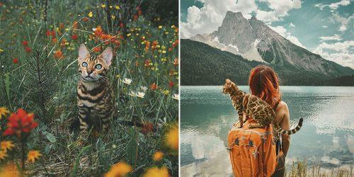 Suki, the Traveling Bengal Cat Lives Better Life Than You