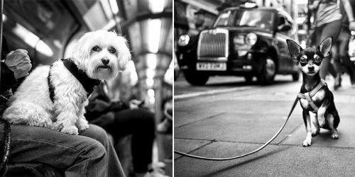 Portraits of Different Dog Personalities from All Around the World