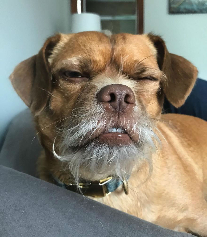 Meet Bacon, the Dog of Thousand Facial Expressions