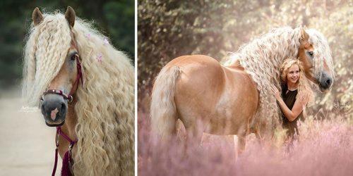 Meet Storm – Rapunzel of Horses