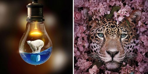 Dual Meaning of Dreamy Animal Portraits by Andreas Häggkvist – Environmental Stand