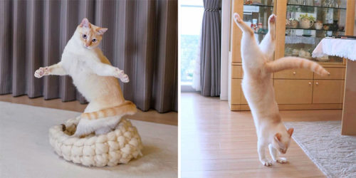 Breakdancing Cat Chaco from Japan – From a Rescue Cat to Stardom