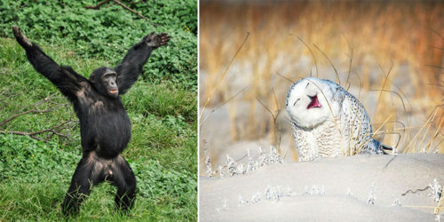 2019 Comedy Wildlife Photography Awards – Our Favorite Entries