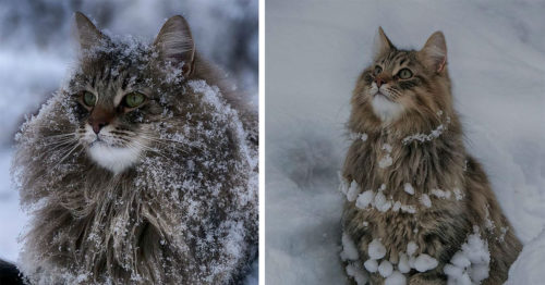 Winter Suits These Finnish Cats Perfectly