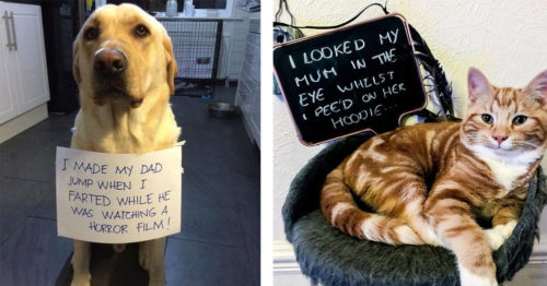 Hilarious 'Pet-Shaming' Brings Smiles to Our Faces Once Again