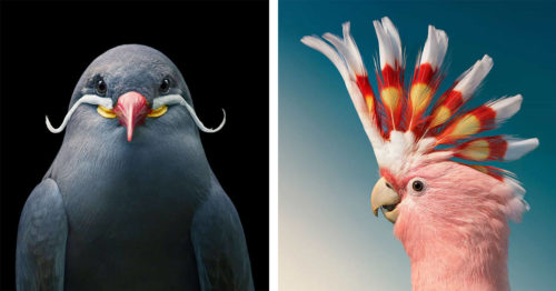 Quirky and Colorful, Endangered Birds in Enthralling Portraits by Tim Flach